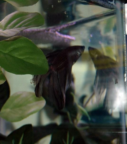 CiciFish_5346w