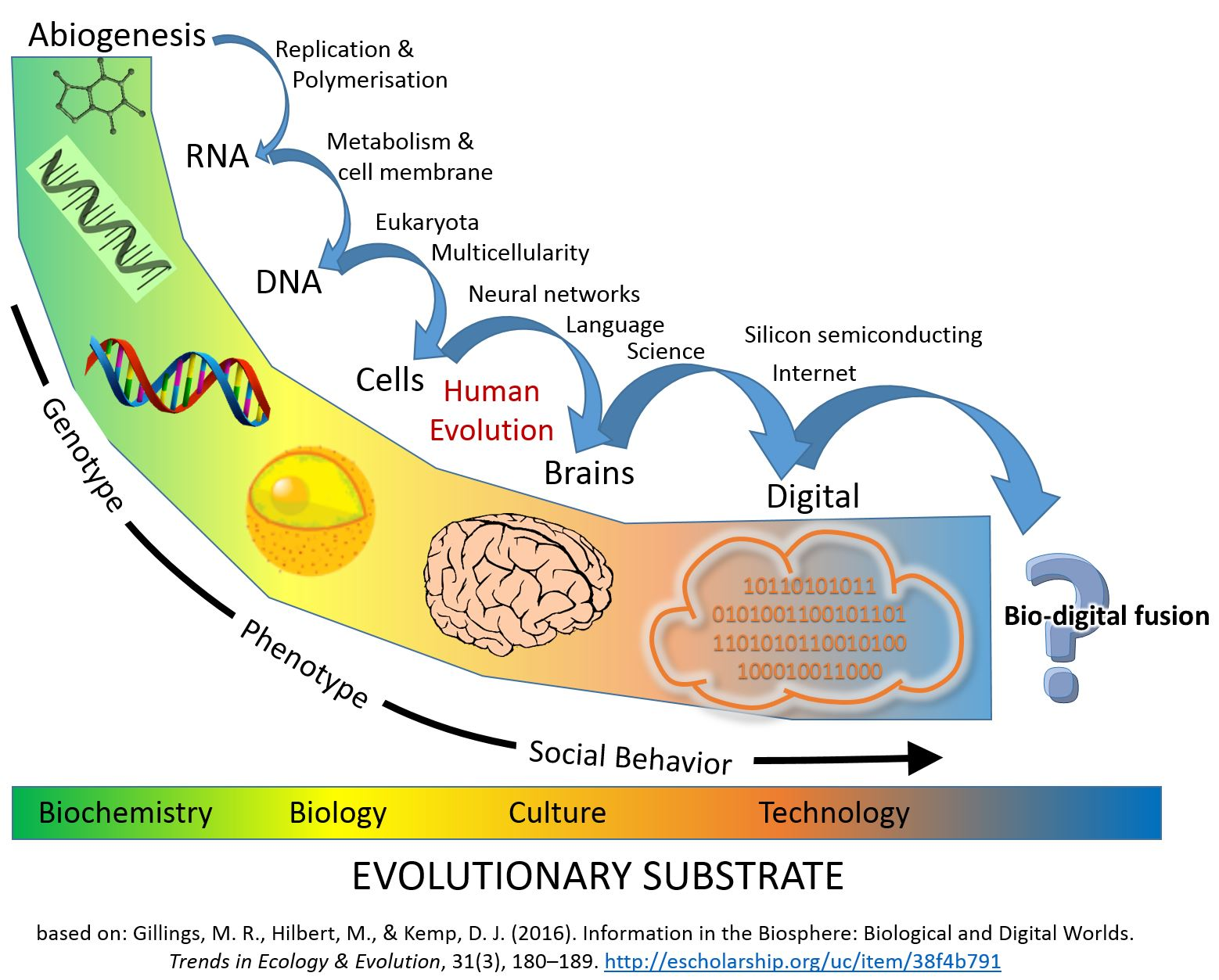 https://i0.wp.com/shivashaktibhava.files.wordpress.com/2018/04/major_evolutionary_transitions_digital.jpg?ssl=1&w=450