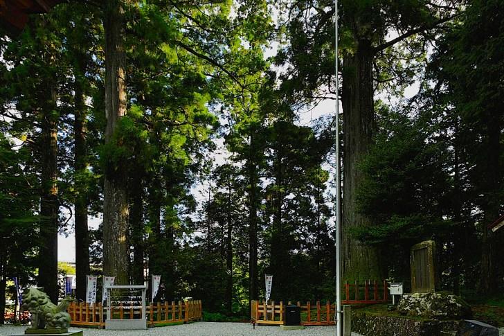 須山浅間神社御神木