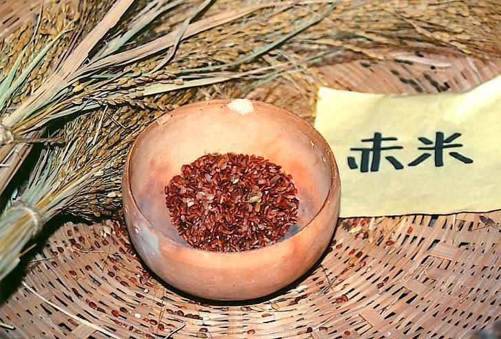 登呂博物館に展示される古代米(赤米)