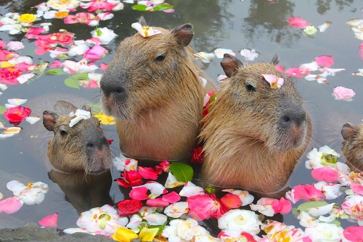 バラの香りにご満悦!