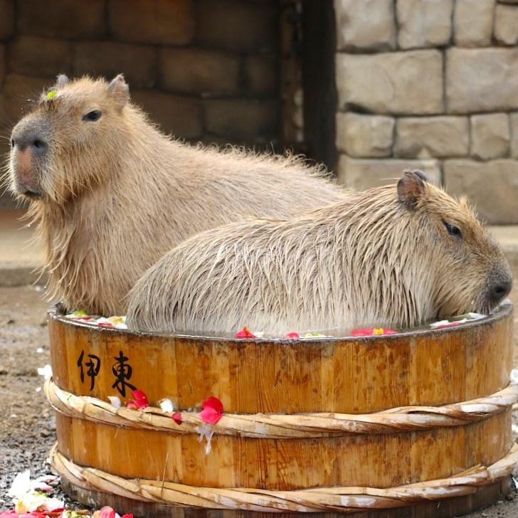 11月26日(いい風呂の日)の『たらい湯』