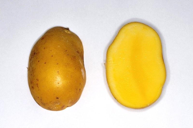 incanomezame-potato