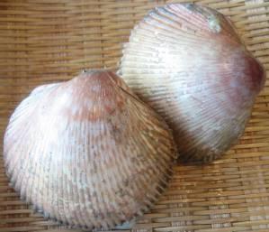 TORIGAI-SHELL