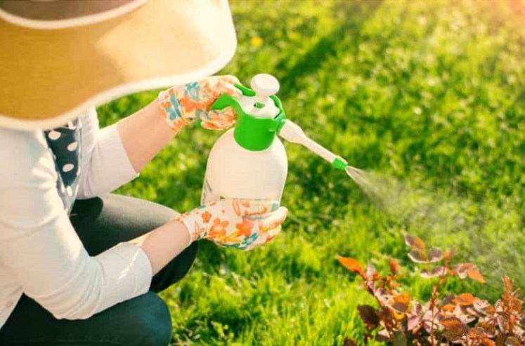 أفضل 11 طريقة لصناعة مبيد حشرات عضوي لنباتات المنزل | شلون؟