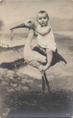 http://www.pinterest.com/kayaives/baby-n-stork/