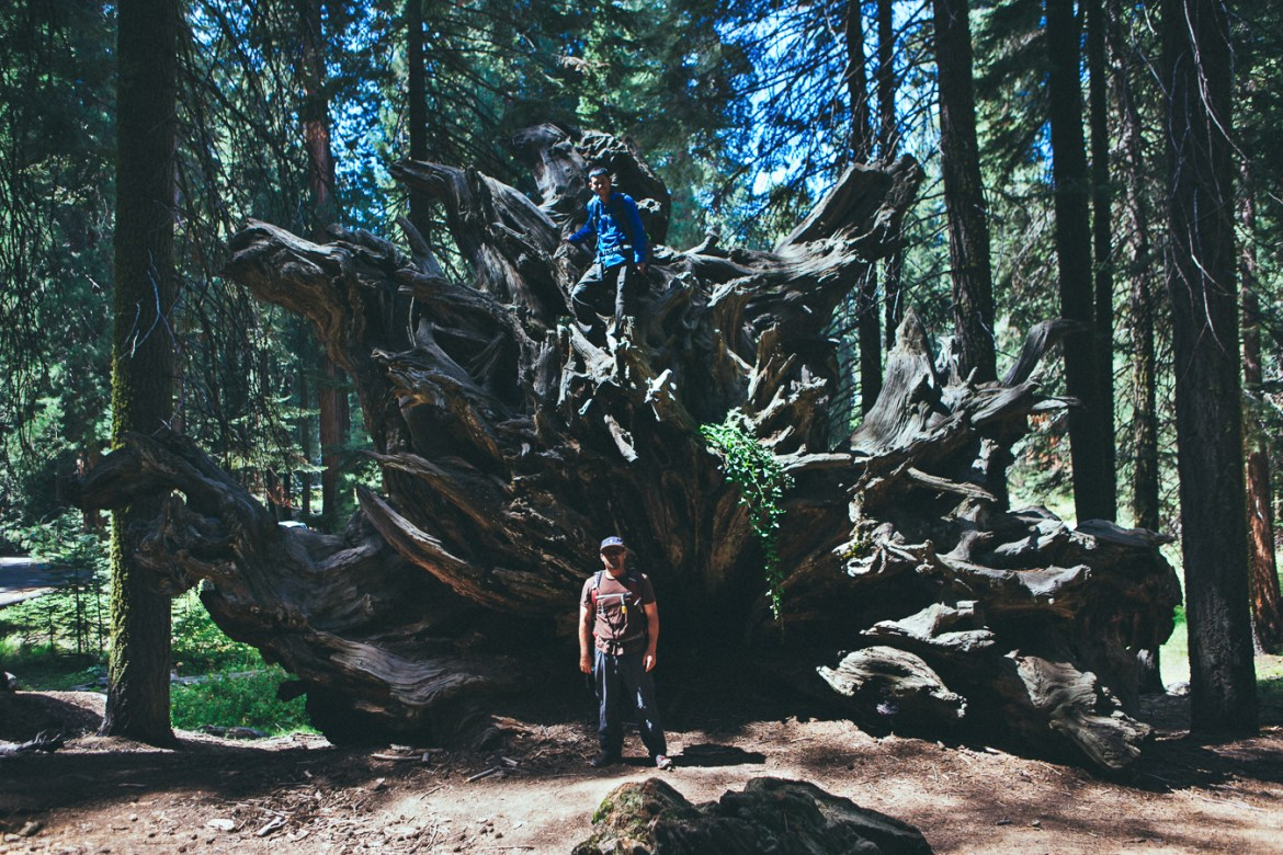 150917_sequoia_x_robbiesell_053