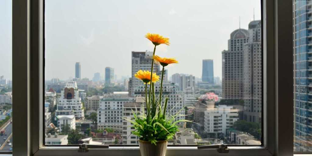 window with flower pot and city skyline view