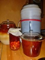 Fermented foods: homebrew beer, shrub, kvassa and kimchi