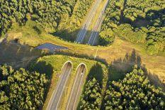 bridges-for-animals-around-the-world-58a4738ddb0a1__880