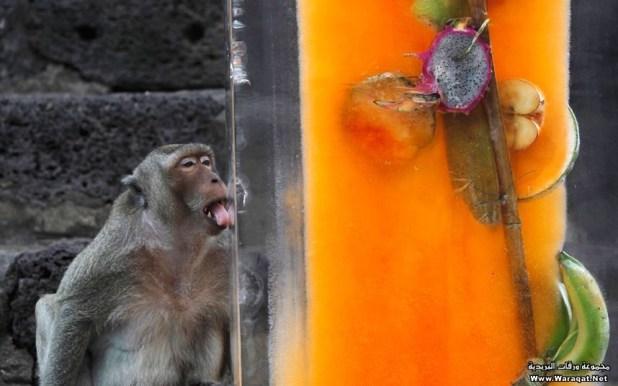 monkey (18)