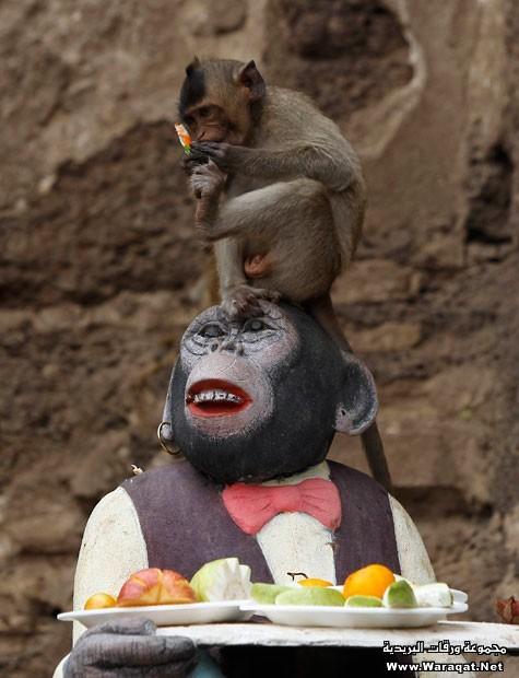 monkey (23)