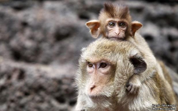 monkey (9)
