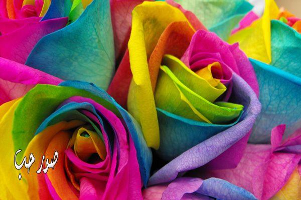 اجمل صور ورود بألوان قوس قزح ولا اجمل