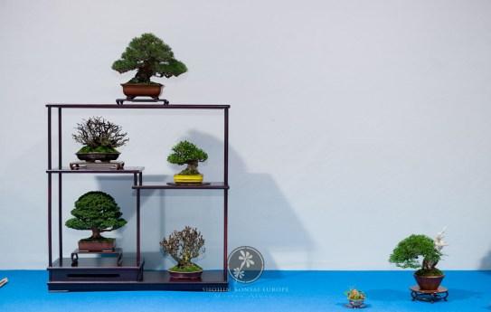 Pinus thunbergii, Chaenomeles japonica, Gardenia, Chamaecyparis obtusa `Sekka`, Berberis japonica, Juniperus chinensis `Itoigawa` - Bob van Ruitenbeek.