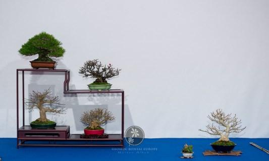 Pinus thunbergii, Chaenomeles speciosa `Chojubai´, Acer palmatum, Acer buergerianum, Magnolia stellata - Bob van Ruitenbeek.