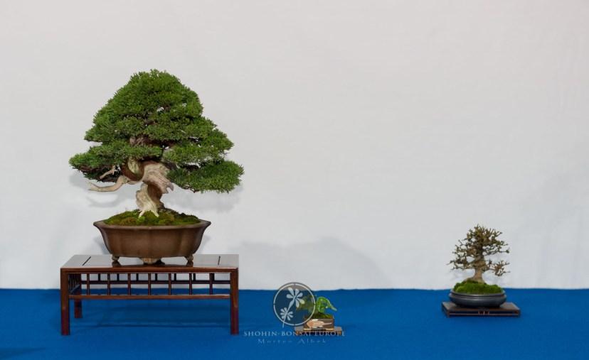 Juiperus chinensis - Peter Gielen.