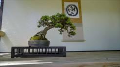 EMPIRE-bonsai-pots-basics.00_01_22_00.Still011