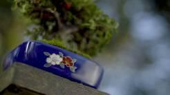 EMPIRE-bonsai-pots-basics.00_03_38_24.Still002