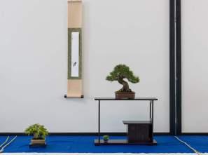 Årets Shohin Bonsai - Søren Meyer. Pinus thunbergii, Acer palmatum.