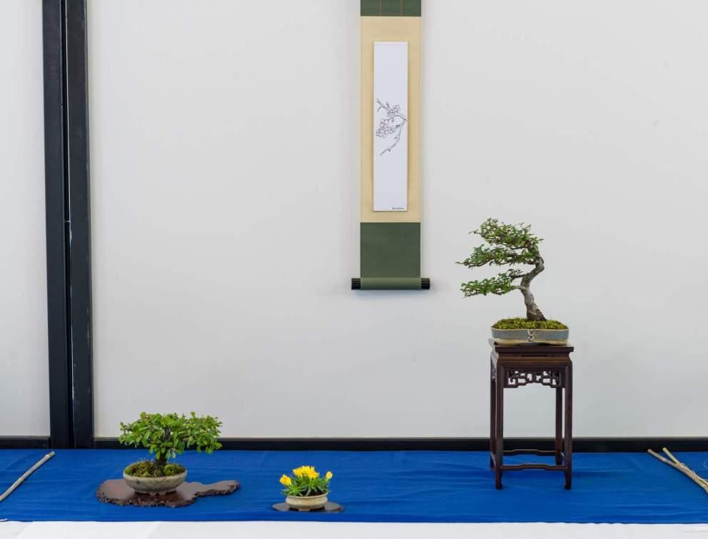 Shohin-bonsai - hædrende omtale. Lene Scheid. Ulmus, Chaenomeles.