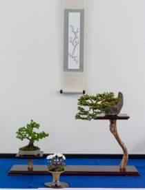 EBA Award. Lene Scheid. Picea glehnie, Larix kampferi.