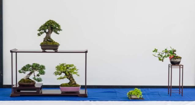 Morten Albek. Taxus baccata, Juniperus chinensis, Kork Bark Elm, Chaenomeles.