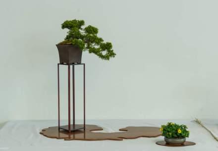 Rüdiger Scheid. Juniperus chinensis.