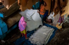 Workers drying and stretching raw hide in a tannery.