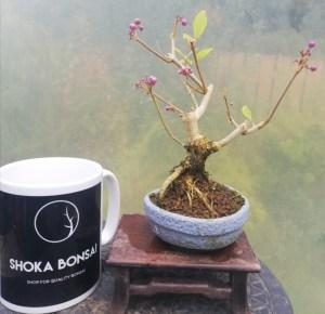 Beautyberry Bonsai Tree