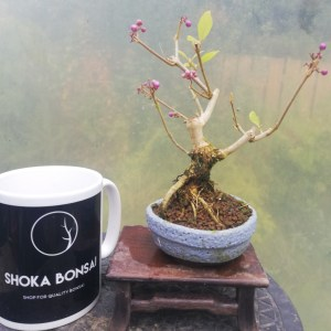 Beautyberry Bonsai Tree
