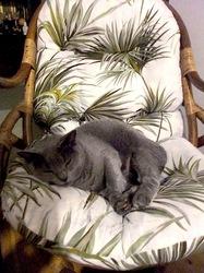 屈伸ポーズで寝ているニャンコ