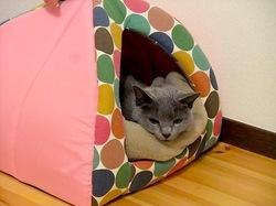 ネコハウスでうたた寝中のニャンコ