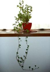 観葉植物(アイビー)と空也像が似てる
