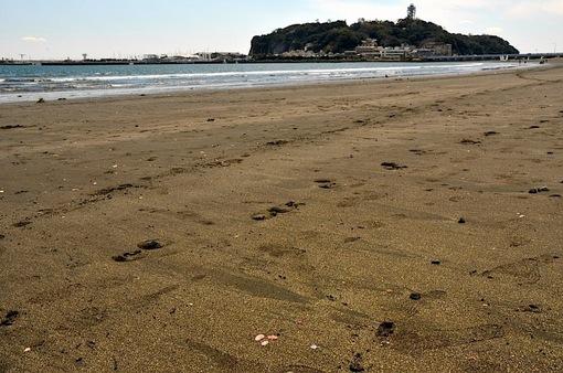 湘南江ノ島片瀬西浜でさくら貝拾い