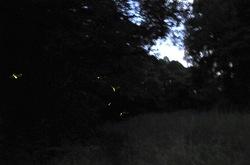 石川丸山谷戸ほたるの里のホタル
