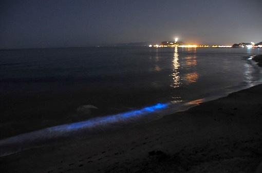2015年のゴールデンウイークは七里ガ浜で夜光虫がスゴい!