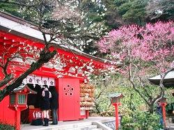 鎌倉荏柄天神社の紅白梅