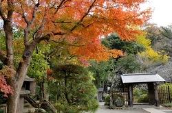 北鎌倉浄智寺の山門付近の紅葉
