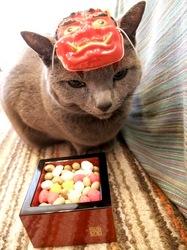 節分豆まきコスプレのネコ(ロシアンブルー)