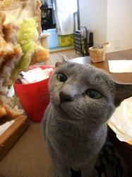 マクドナルド(マック)のハンバーガーが大好物なロシアンブルー(ネコ)ティナ