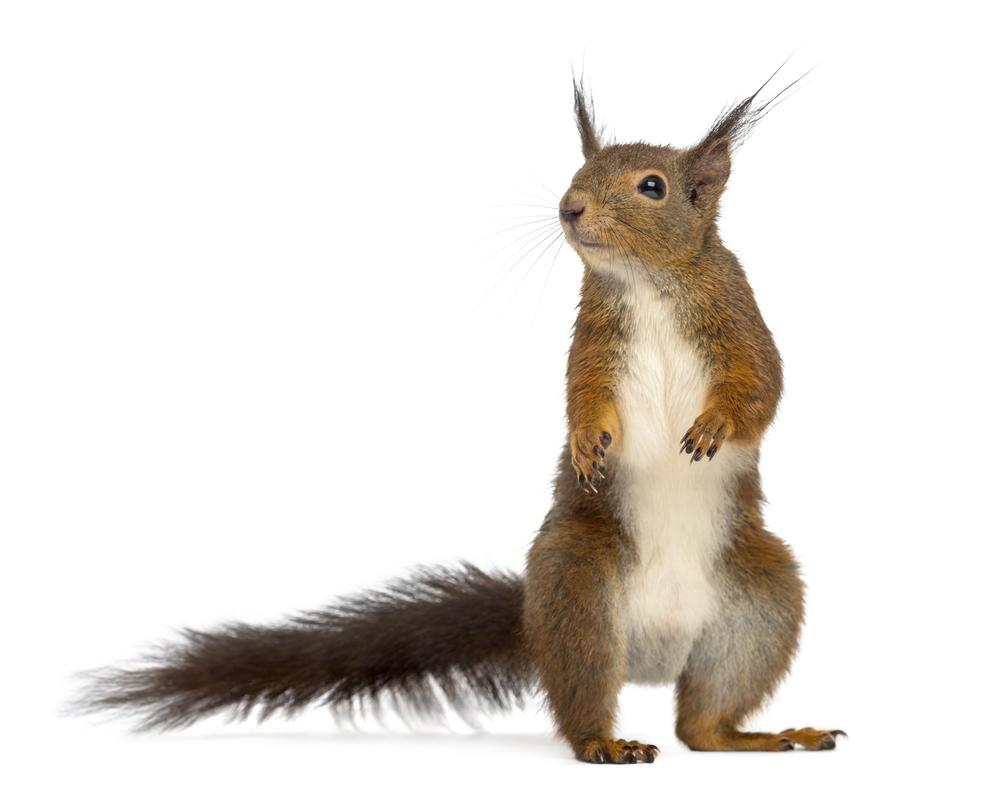 squirrel removal services colorado