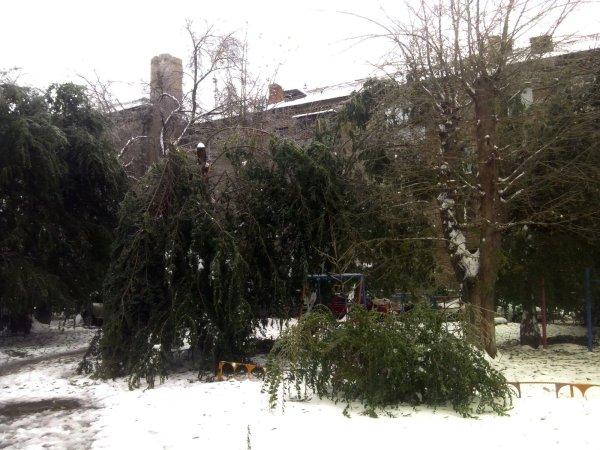 Лёд ломает деревья