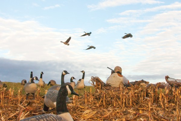 Facts About Waterfowl Loads