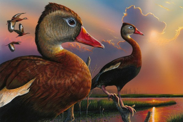 2020 Duck Stamp Winner Announced