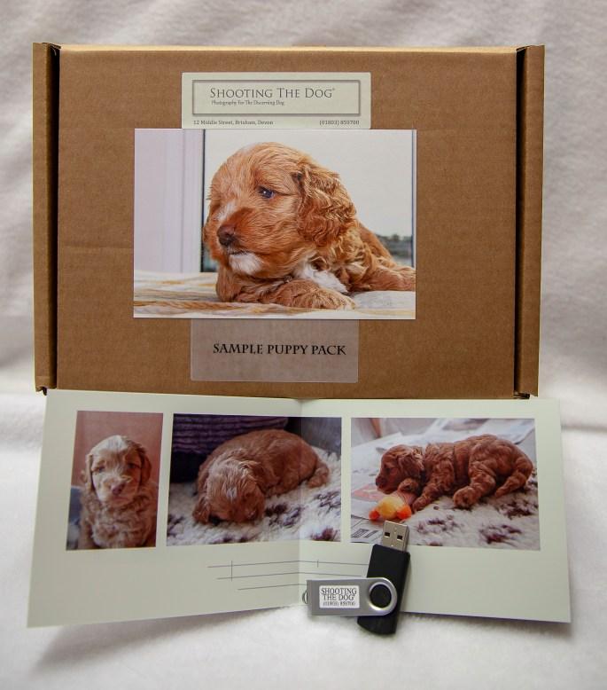 Puppy Pack Brixham Torbay Devon