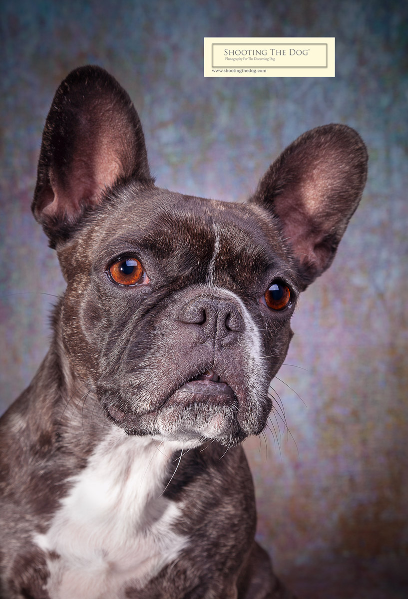 Dog & Pet Portrait - What Will It Cost