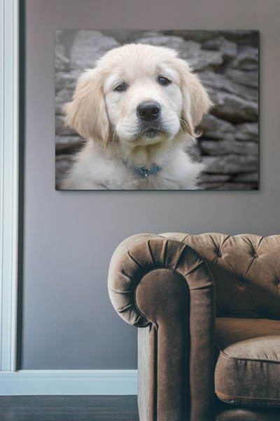 Why wouldn't you want to show off some wall art of your precious pet in your home?