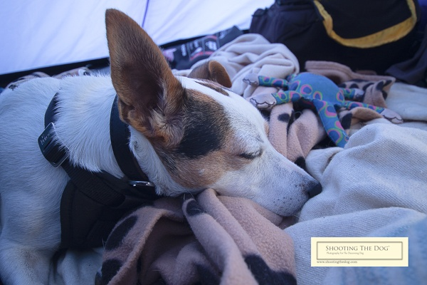 Camping - Sleepy Dog