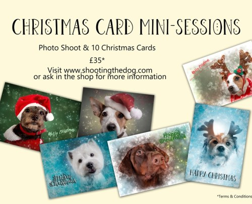 Christmas Card Mini Sessions Poster